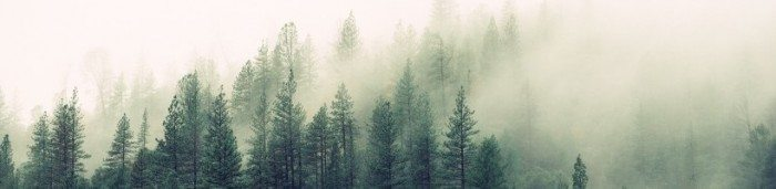 fog-forest-haze-4827-824x550