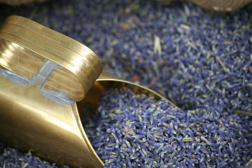 Lavender oil for psoriasis