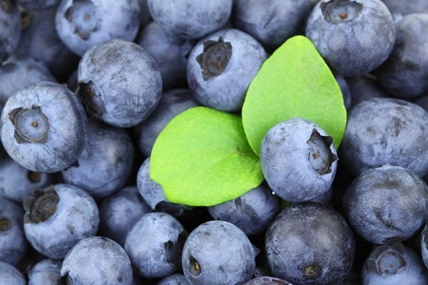 Blueberries for glycation of the skin
