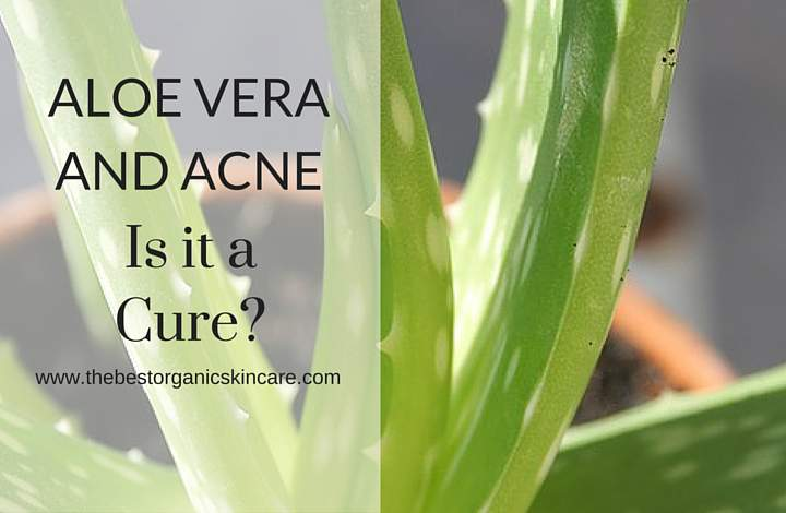 Aloe Vera And Acne Is It A Cure The Best Organic Skin