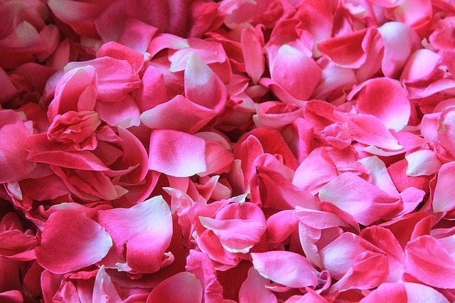 Rose absolute essential oil skin benefits