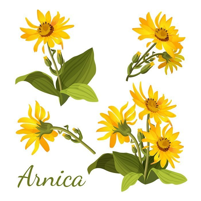 Arnica Facial Mask benefits for the skin
