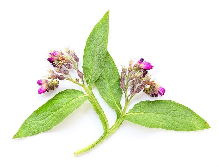 Best comfrey oil for the skin