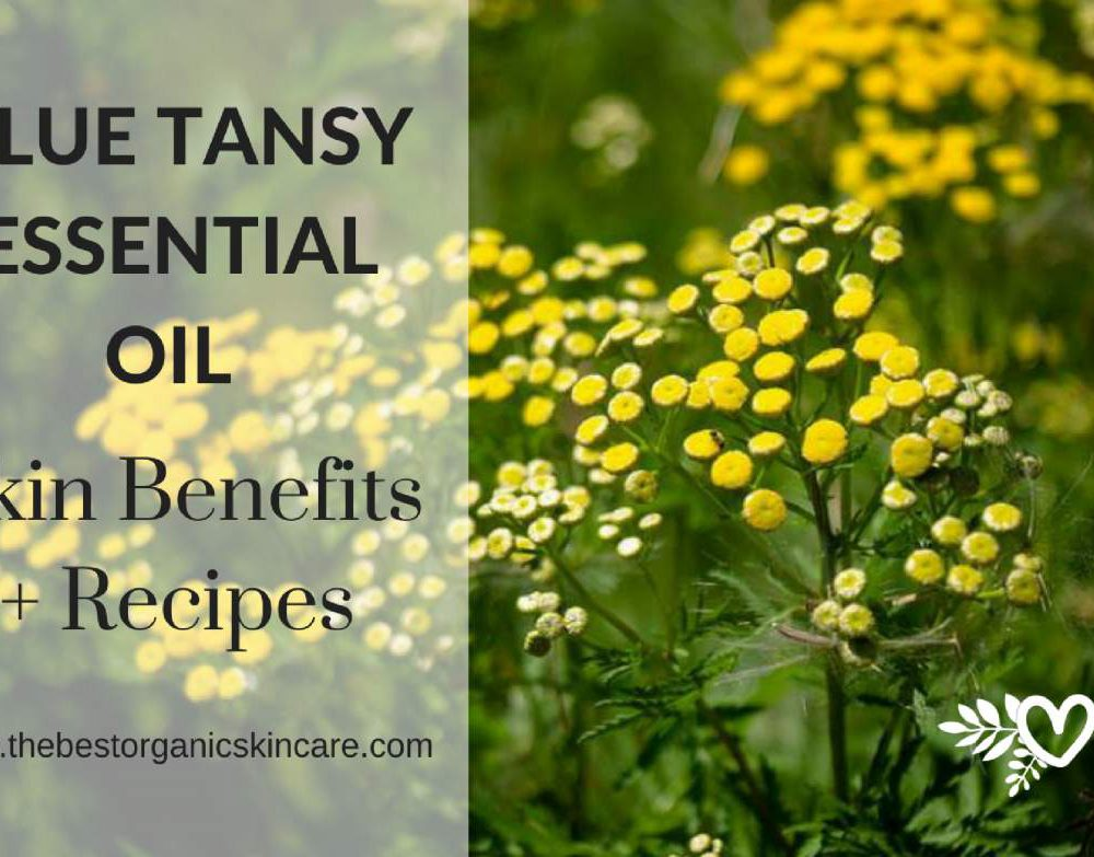 blue tansy essential oil skin benefits