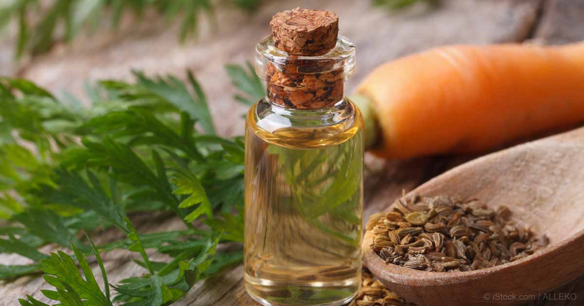 essential oils for chapped skin - carrot seed