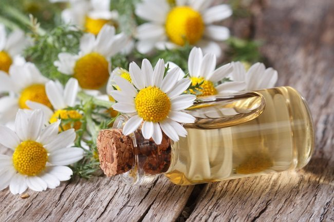 essential oils for chapped skin - chamomile