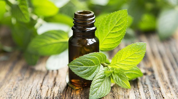 peppermint essential oil for poison ivy
