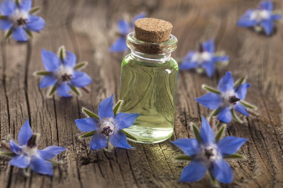 borage oil benefits for the skin