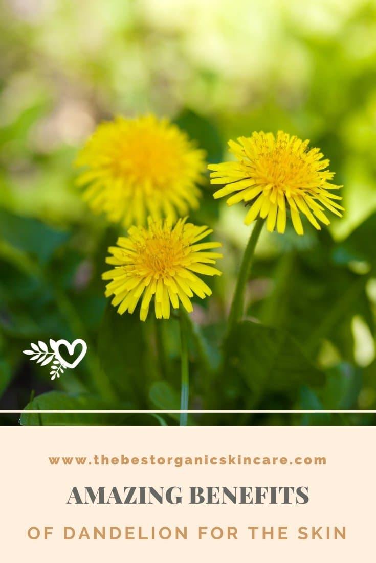 amazing benefits of dandelion for the skin