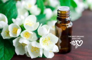 skin benefits of jasmine essential oil