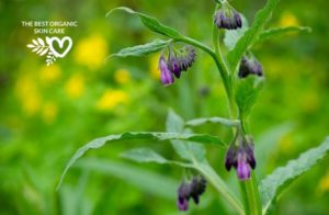 benefits of comfrey for the skin