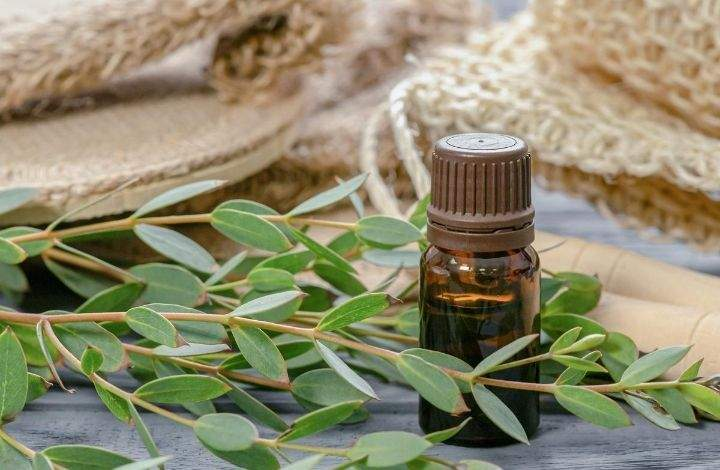 euculyptus essential oil for nail growth