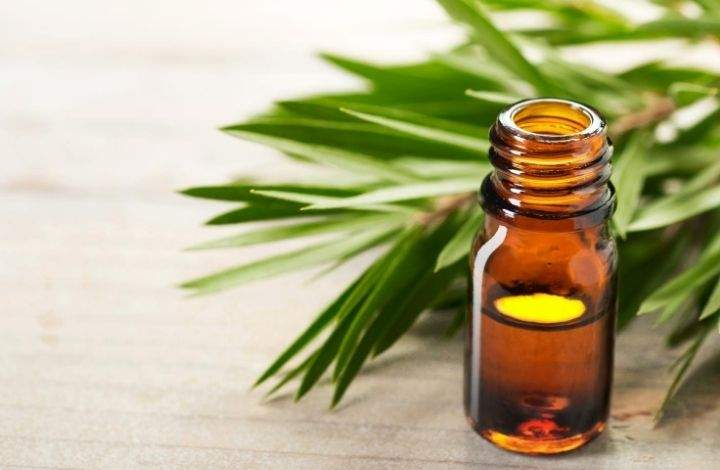 tea tree essential oil for healthy nails